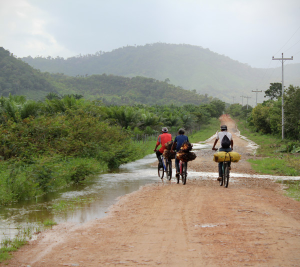 Men carrying palm oil fruits on their bicycles outside the El Tumbador plantations