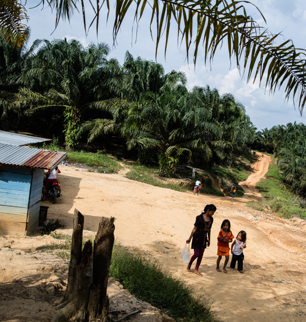 The landscape that Revan and many other Batin Sembilan kids now call home amounts to an endless sea of oil palm