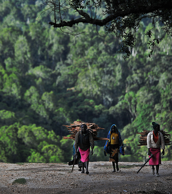 Women carrying firewood emerge from the forest
