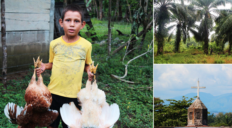 A boy carrying live chickens in Panamá, a peasant community that borders on Dinant's Paso Aguán plantation